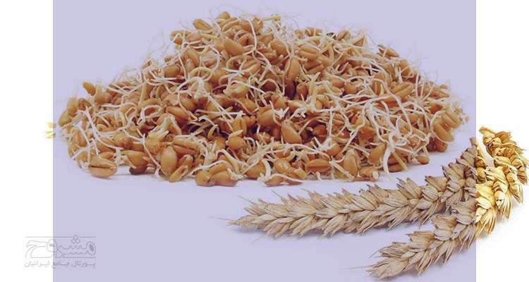جوانه گندم و ویتامین B17 , جوانه گندم ویتامین B17 , ویتامین B17 موجود در جوانه گندم , جوانه گندم موجود در ویتامین B17 , خواص ویتامین B17 موجود در جوانه گندم