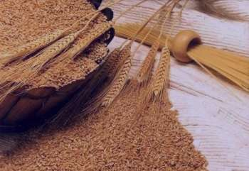 خواص گندم در طب سنتی ، خواص سبوس گندم در طب سنتی ، خواص جوانه گندم در طب سنتی ، گندم در طب سنتی