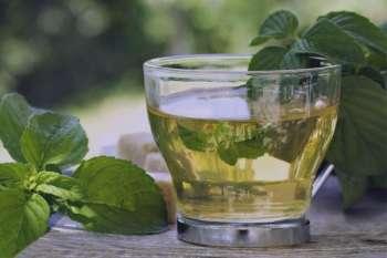 چای سبز در طب سنتی , خواص چای سبز در طب سنتی , فواید چای سبز در طب سنتی , مصرف چای سبز در طب سنتی