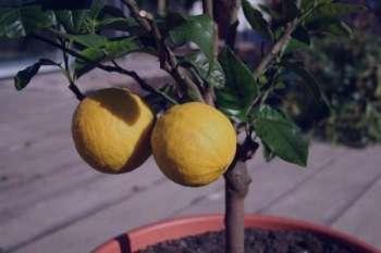 نارنج در بارداری ، خواص نارنج در بارداری ، بهار نارنج در بارداری ، عرق بهار نارنج در بارداری