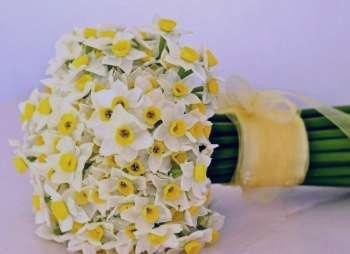 گل نرگس و درمان افسردگی , خواص گل نرگس و درمان افسردگی , خاصیت گل نرگس و درمان افسردگی