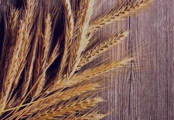 جوانه گندم برای چاقی , خواص جوانه گندم برای چاقی , جوانه گندم برای چاقی صورت , خواص جوانه گندم