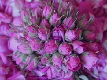 برگ سنا و گل سرخ برای پوست , خواص برگ سنا و گل سرخ برای پوست , ماسک برگ سنا و گل سرخ برای پوست