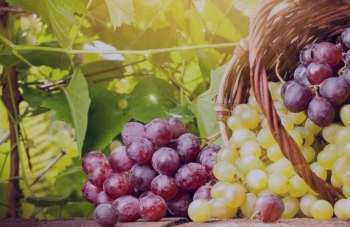 انگور در بارداری , خواص انگور در بارداری , مصرف انگور در بارداری