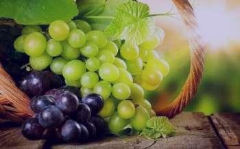 انگور در طب سنتی ، رژیم انگور در طب سنتی ، شیره انگور در طب سنتی