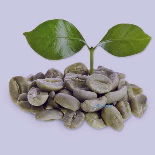 قهوه سبز در طب سنتی , خواص قهوه سبز در طب سنتی , قهوه سبز در طب سنتی و اسلامی