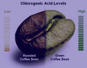 Image result for خواص قهوه سبز و طرز استفاده