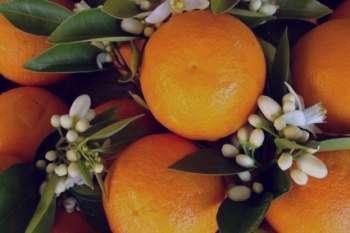 مصرف بهار نارنج در بارداری , تاثیر مصرف بهار نارنج در بارداری , خواص مصرف بهار نارنج در بارداری , خاصیت مصرف بهار نارنج در بارداری