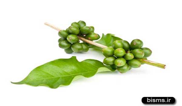 قهوه سبز , قهوه سبز لاغری , قهوه سبز و لاغری , خواص قهوه سبز