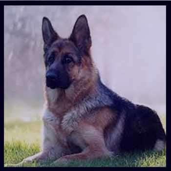 تعبیر خواب سگ , تعبیرخواب سگ , سگ در خواب دیدن , تعبیر خواب سگ سیاه هار