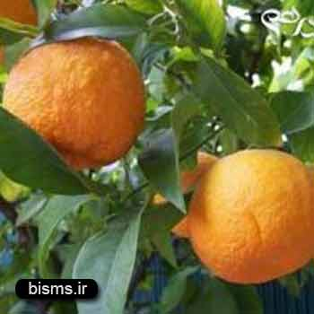 نارنج ، خواص نارنج , نارنج و لاغری و دیابت
