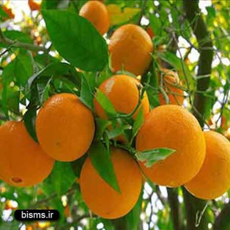 پرتقال در دوران بارداری , پرتقال , خواص پرتقال , فواید پرتقال