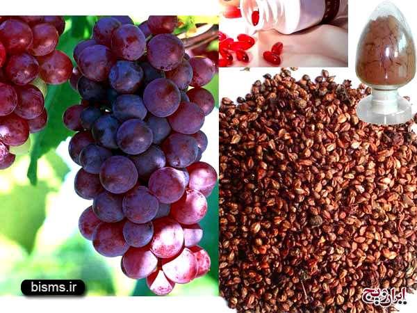 روغن هسته انگور ، خواص روغن هسته انگور ، روغن هسته انگور برای مو ، روغن هسته انگور برای پوست