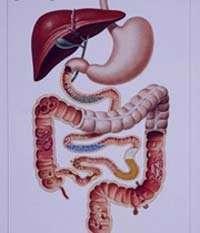 بیماری های گوارشی, بیماری اسهال