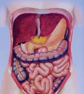 التهاب روده,بیماری التهاب روده,التهاب روده در بارداری,علائم التهاب روده,درمان التهاب روده