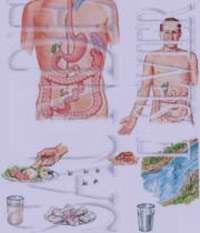 علائم بیماری حصبه+درمان حصبه