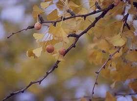 غذای زمستانی, مزاج پاییز و زمستان, مزاج فصل پائیز
