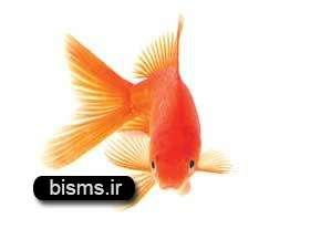 به ماهی های قرمز دست نزنيد