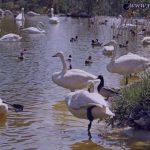 عکس های زیبا از باغ پرندگان تهران