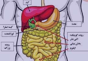 دستگاه گوارش, اسهال مزمن, تغذيه درماني
