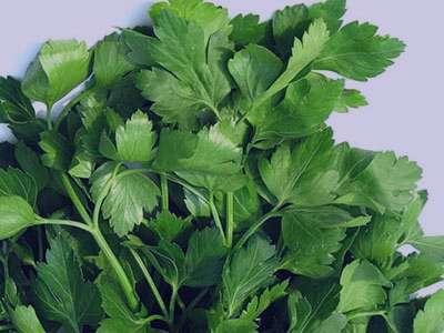 درمان ورم پا با گیاهان دارویی