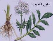 گیاهان دارویی آرام بخش