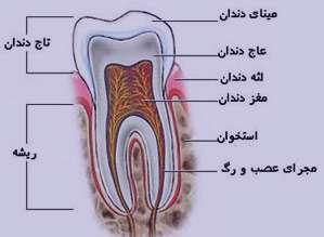 دندان عصبکشی, دهان و دندان, عصبکشی دندان