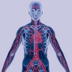 بیماریهای قلبی و عروقی, سکتههای قلبی