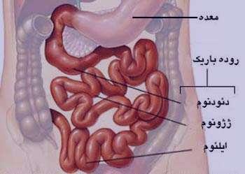 علائم بیماری سلیاک, بیماری گوارشی, سیستم ایمنی بدن