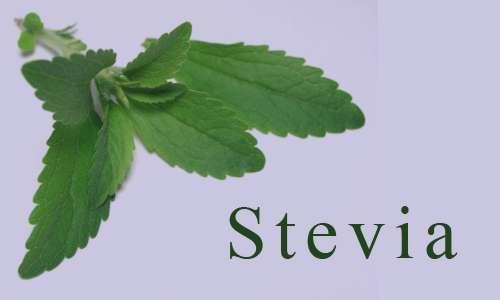 آشنایی با خواص درمانی گیاه استویا