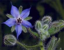 خواص استفاده از گیاهان باغچه ای