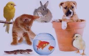 نگهداری از حیوانات خانگی, کلینیک های حیوانات