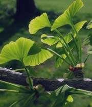 شناخت گیاهان ضد سرطان