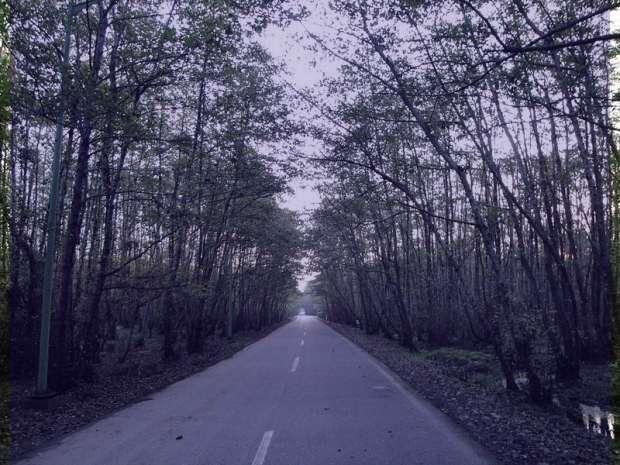 گیسوم,عکس گیسوم,ساحل گیسوم,جنگل گیسوم