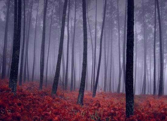 عکس طبیعت , منظره , عکس منظره , عکس طبیعت زیبای ایران , طبیعت جهان