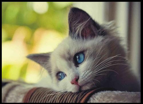 تعبیر خواب گربه , تعبیر خواب گربه سیاه , تعبیر خواب گربه وحشی , تعبیر خواب گربه مرده , تعبیر خواب گربه زخمی
