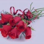 عکس های زیبای گل رز سرخ و سفید و آبی