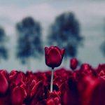 گالری زیباترین عکس ها و تصاویر از طبیعت و منظره های زیبا خرداد 1395