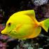 مرجع کامل تعبیر خواب ماهی قرمز مرده خوردن