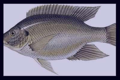 تعبیر خواب ماهی , تعبیر خواب ماهی قرمز , تعبیر خواب ماهی خوردن , تعبیر خواب ماهی مرده , خواب ماهی