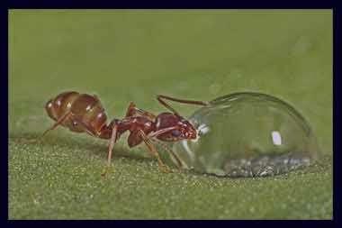 تعبیر خواب مورچه , مورچه در خواب , دیدن مورچه در خواب