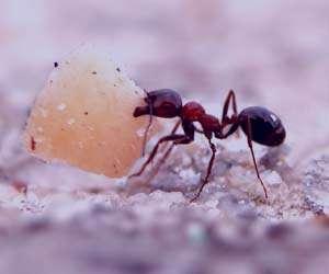 تعبیر خواب مورچه , تعبیر خواب مورچه سیاه بزرگ , تعبیر خواب مورچه روی بدن , تعبیر خواب مورچه سیاه