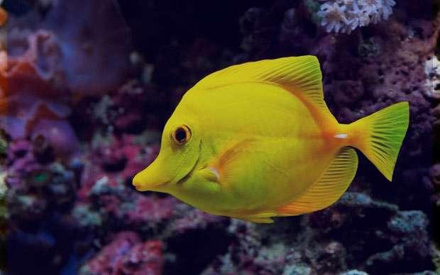 تعبیر خواب ماهی , تعبیر خواب ماهی سیاه بزرگ , تعبیر خواب ماهی سرخ شده , تعبیر خواب ماهی قرمز