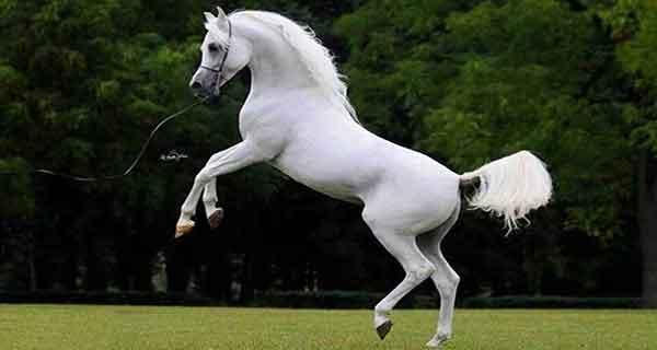 تعبیر خواب اسب , تعبیرخواب اسب , دیدن اسب در خواب