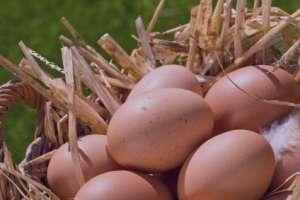 فواید تخم مرغ , خواص تخم مرغ , فواید زرده تخمه مرغ برای پوست , فواید زرده تخمه مرغ برای پوست