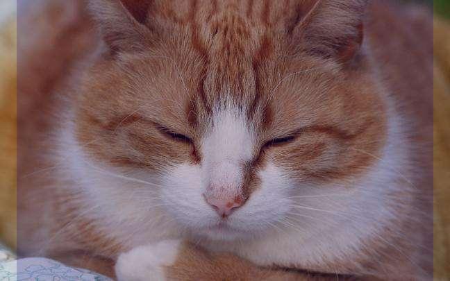 نتیجه تصویری برای تعبیر خواب گربه
