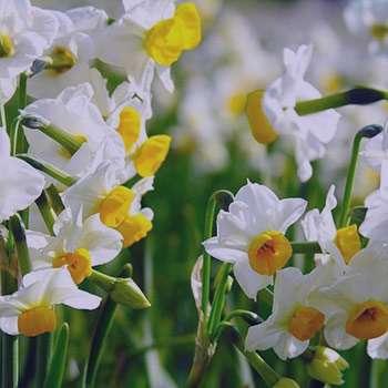 تعبیر خواب گل , تعبیرخواب گل , گل در خواب دیدن