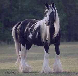 تعبیر خواب اسب , تعبیر خواب اسب سفید , تعبیر خواب اسب سواری , تعبیر خواب اسب قهوه ای