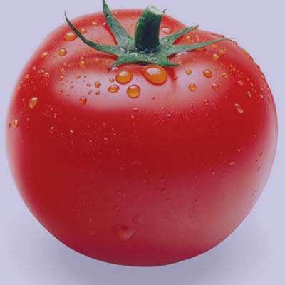 گوجه فرنگی , خواص گوجه فرنگی , فواید گوجه فرنگی , مضرات گوجه فرنگی