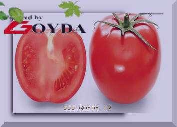 مضرات گوجه فرنگی , گوجه فرنگی , خواص گوجه فرنگی , فوایدگوجه فرنگی